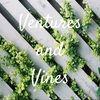 ventures_vines